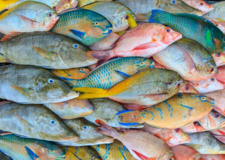 Close up of a variety of colorful fresh fish on display at fishmarket.